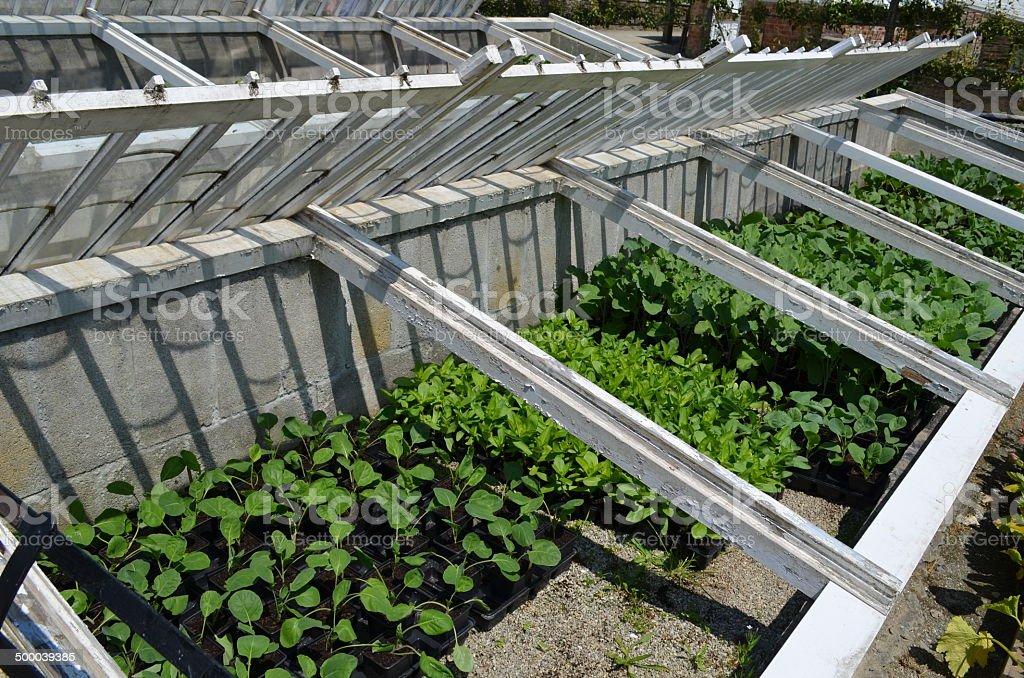 Garden cloche's. stock photo