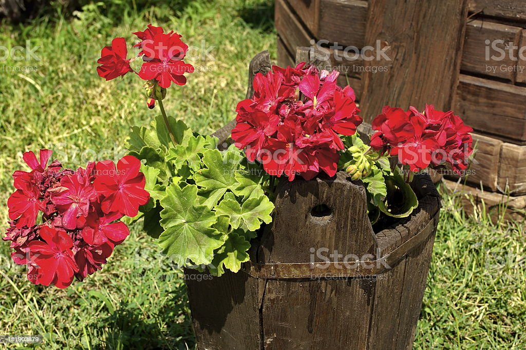 Garden decorations. Pot of flowers. royalty-free stock photo