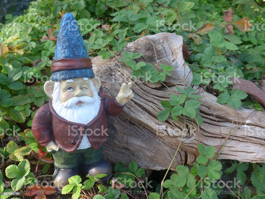 Garden dwarf  in front of a woodden root stock photo