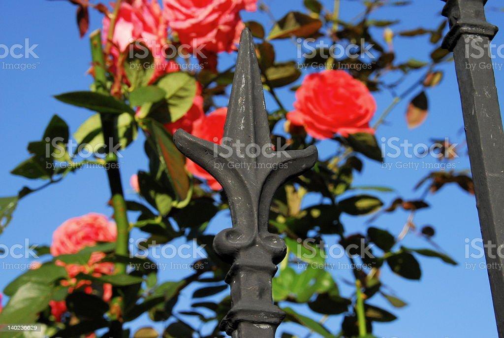 Garden Fence Fluer-De-Lis stock photo