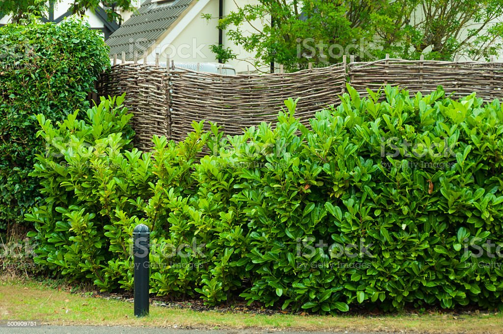 Garden fence in countryside with an overgrown  hedge royalty-free stock photo
