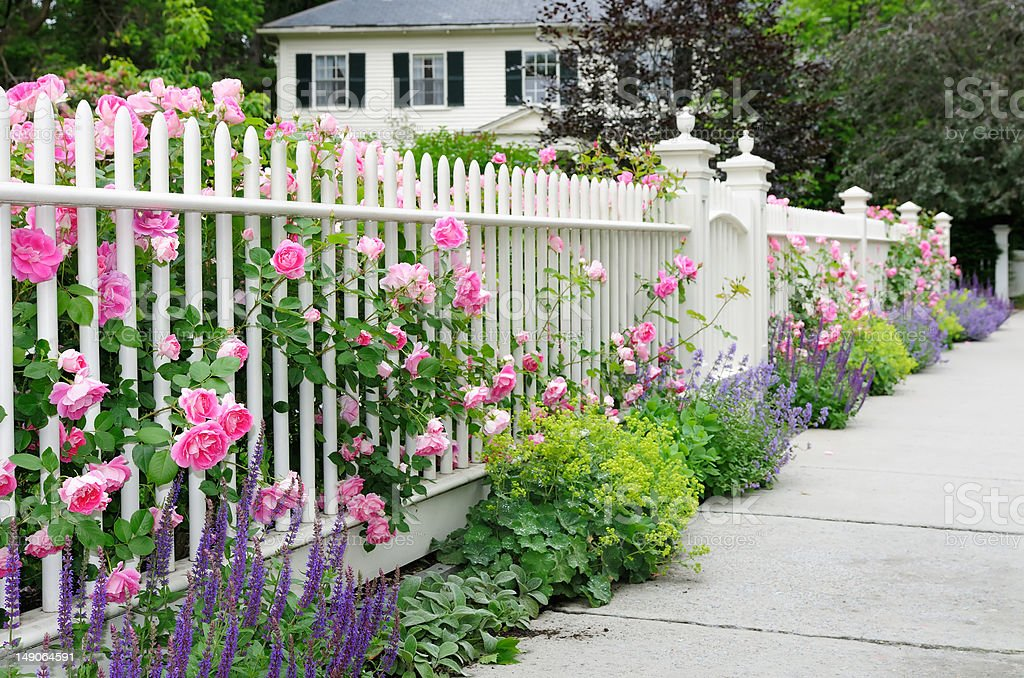 Garden Fence With Roses stock photo