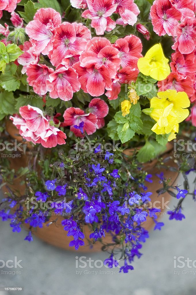 Garden Flower Container royalty-free stock photo