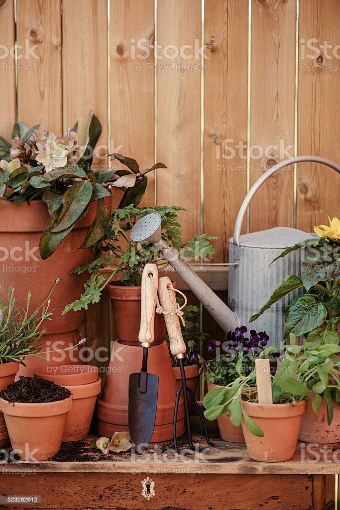 Garden flower pot still life stock photo