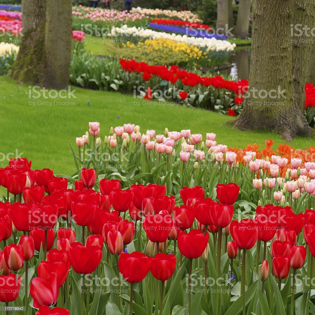 Garden flowers # 17 royalty-free stock photo