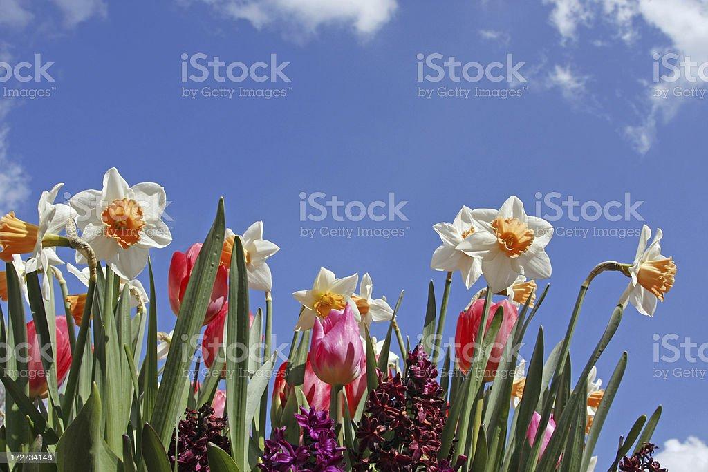 Garden flowers # 12 royalty-free stock photo
