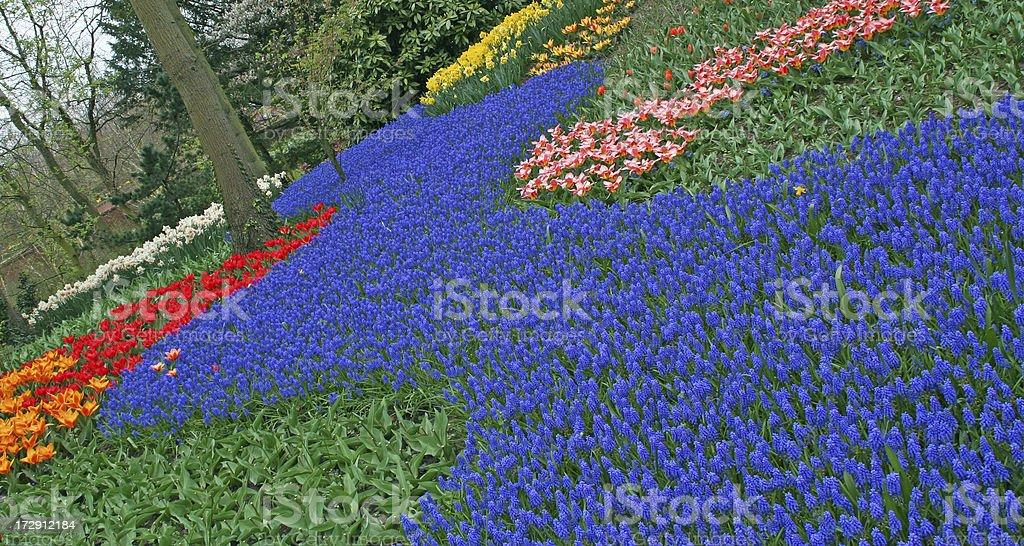 Garden flowers # 24 royalty-free stock photo