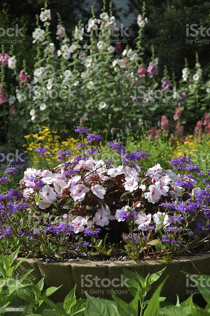 Garden Flowers royalty-free stock photo