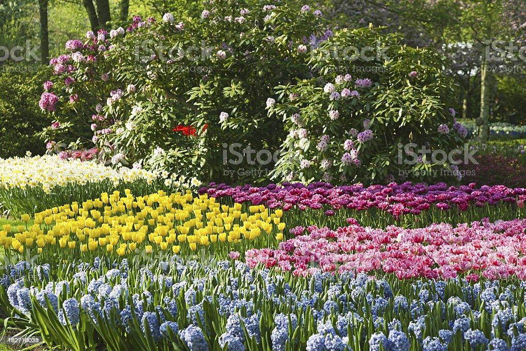 Garden flowers # 80 XXXL royalty-free stock photo