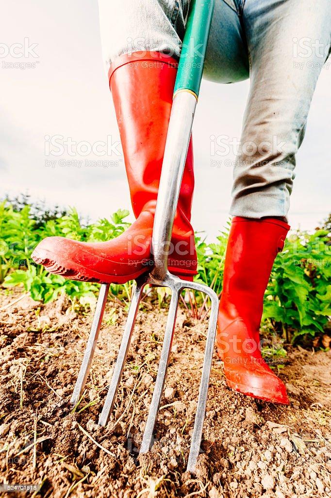 Garden fork in soil stock photo