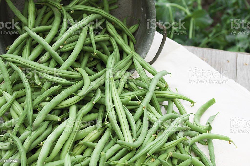 Garden Fresh Green Beans stock photo