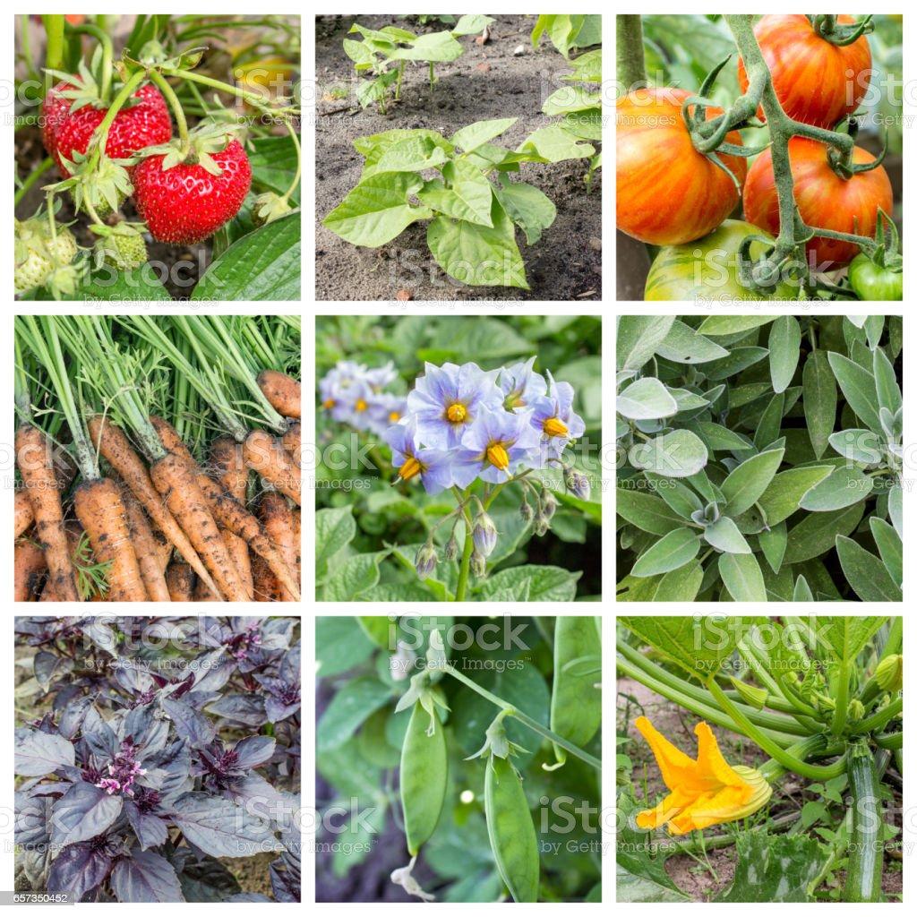 garden fruits stock photo