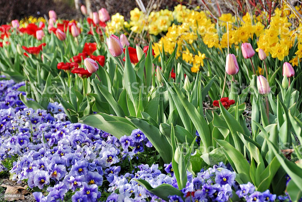 Garden Full Of Blossoms royalty-free stock photo