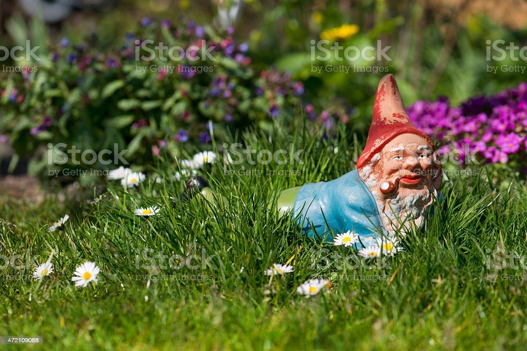 Garden gnome in the grass stock photo