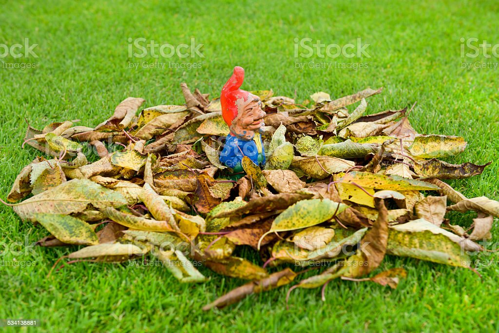 Garden Gnome in the pile of leaves stock photo