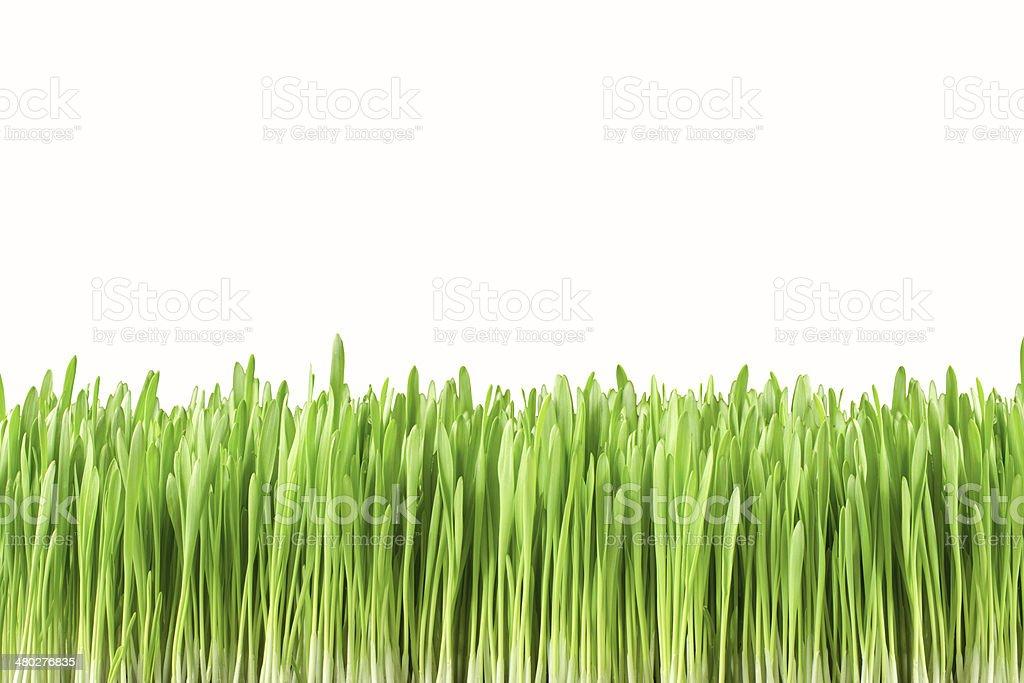 Jardin herbe isolé sur fond blanc photo libre de droits
