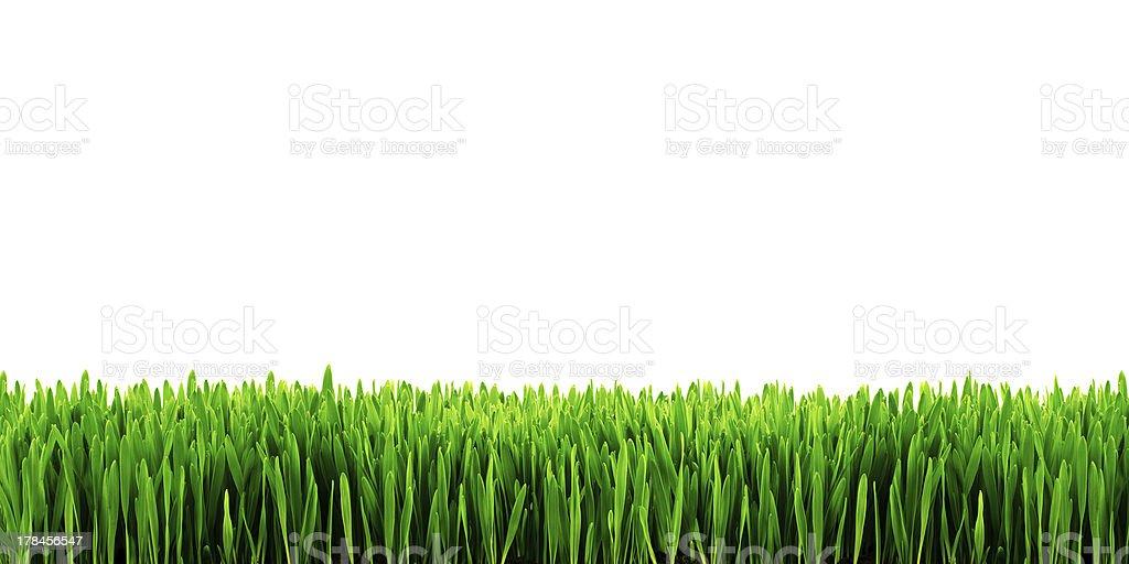 Jardin herbe isolé photo libre de droits