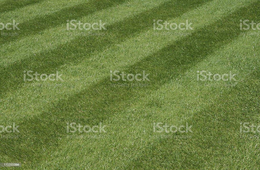 Garden Grass Lawn royalty-free stock photo