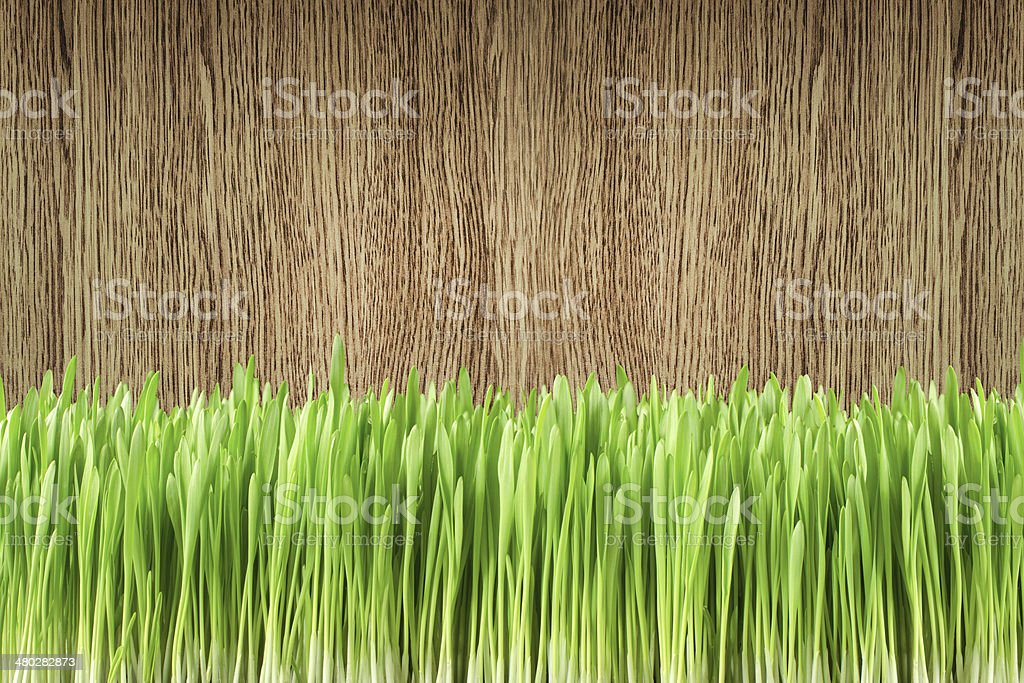 Garden grass on the wood background stock photo
