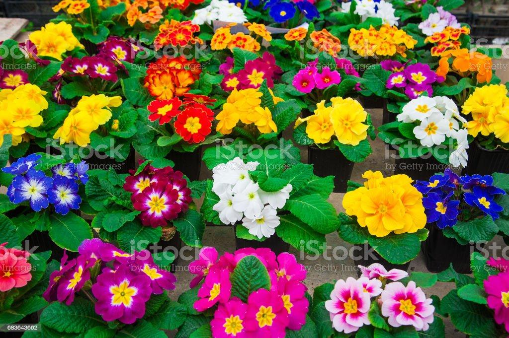 Garden greenhouse. Agribusiness stock photo