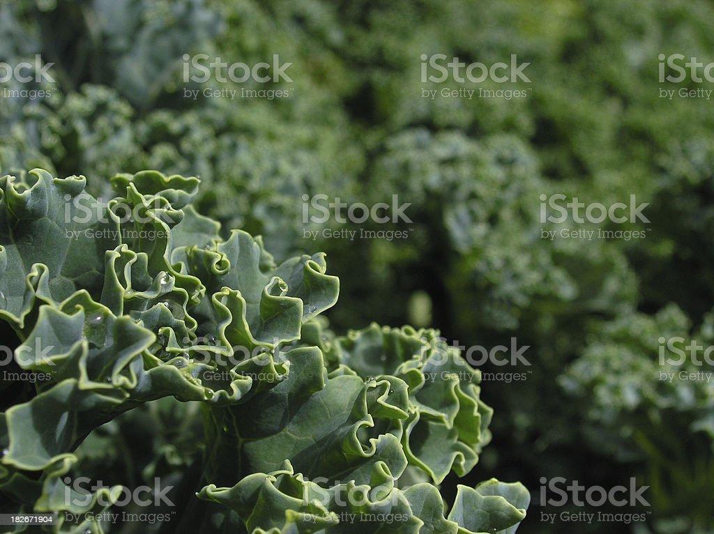 Garden Greens royalty-free stock photo