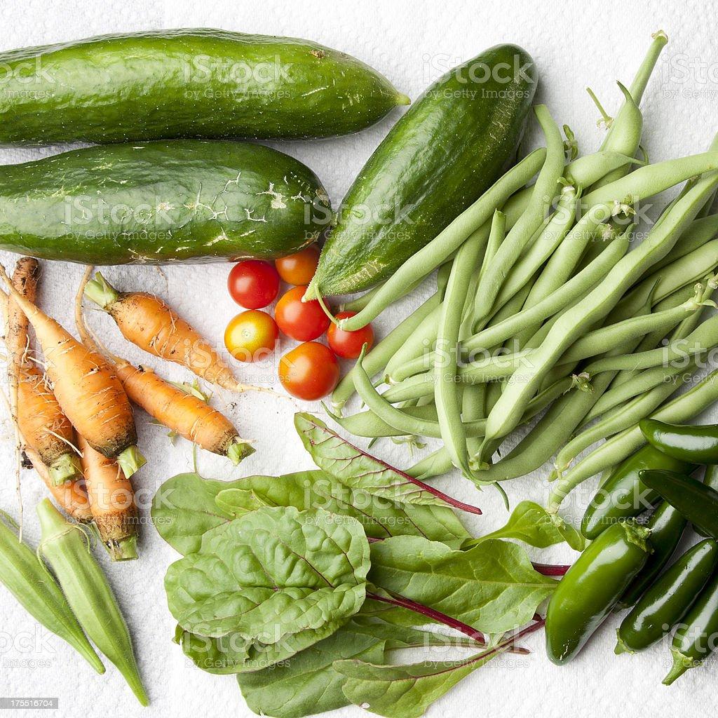 Garden Harvest of Homegrown Vegetables stock photo