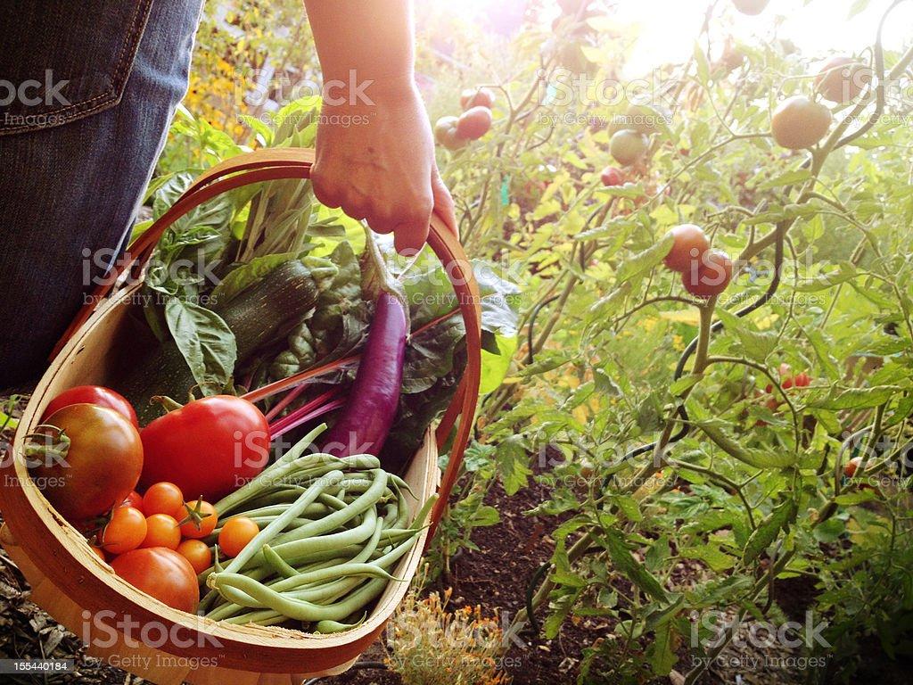 Garden Harvest stock photo