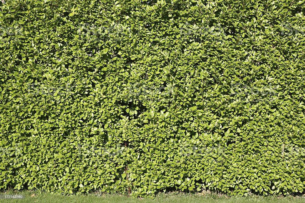 Garden Hedge royalty-free stock photo