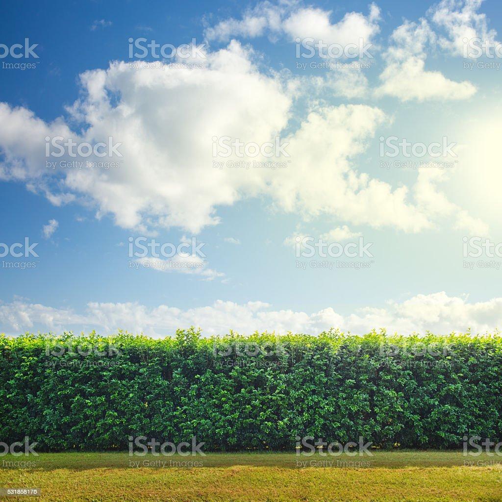Garden Hedge stock photo