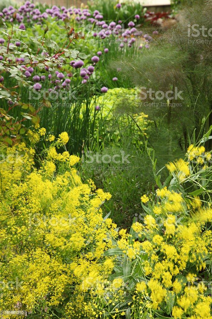 Garden herbs stock photo