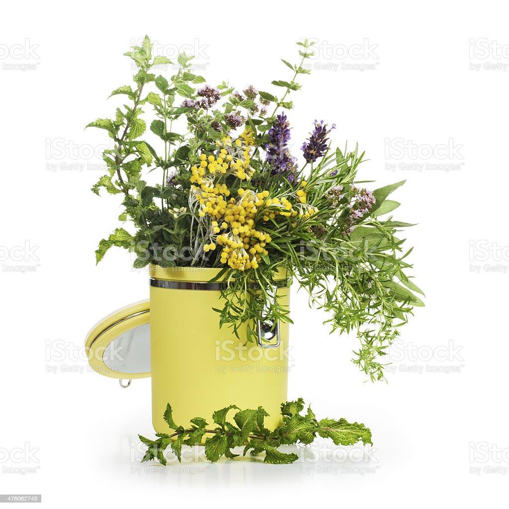 Garden Herbs royalty-free stock photo
