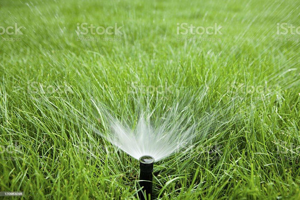 Garden Hose Sprinkler stock photo
