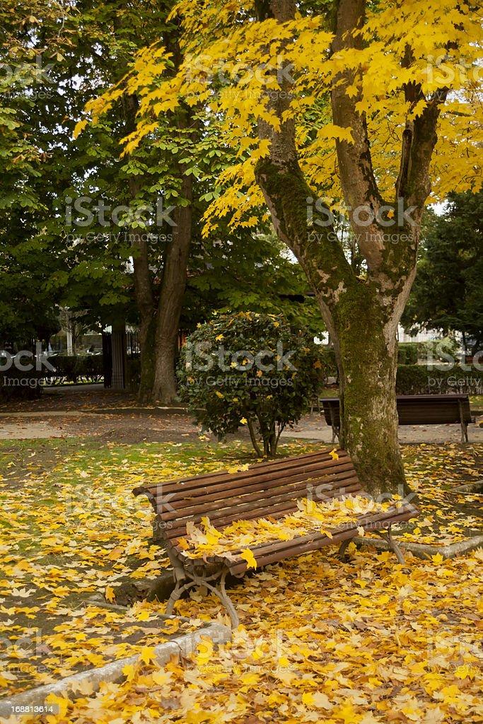 Garden in autumn royalty-free stock photo