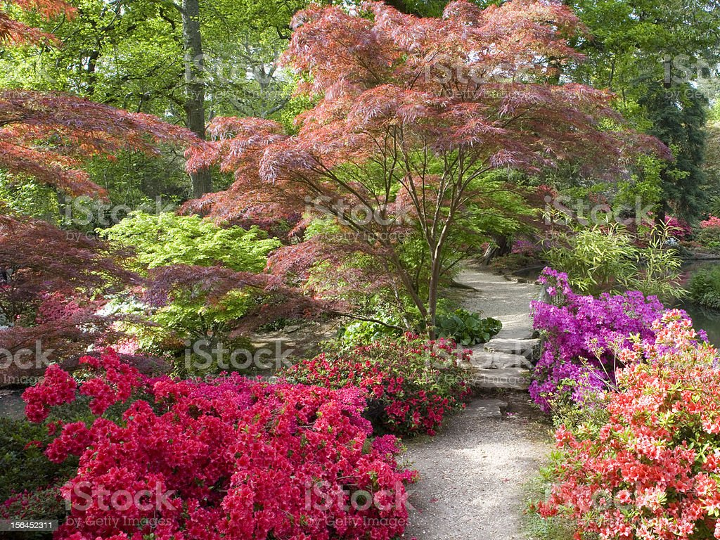 Garden In Bloom stock photo