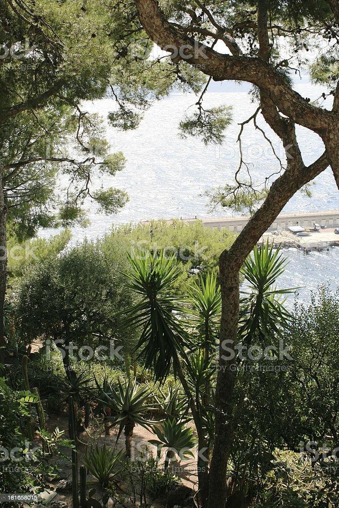 Garden in Monaco stock photo
