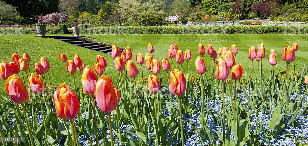 Garden in the Spring, Tulips stock photo