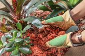 garden maintenence with mulch red timber woodchip
