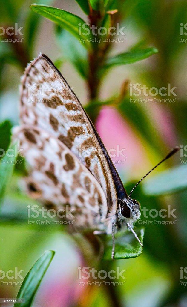 Garden Moth stock photo