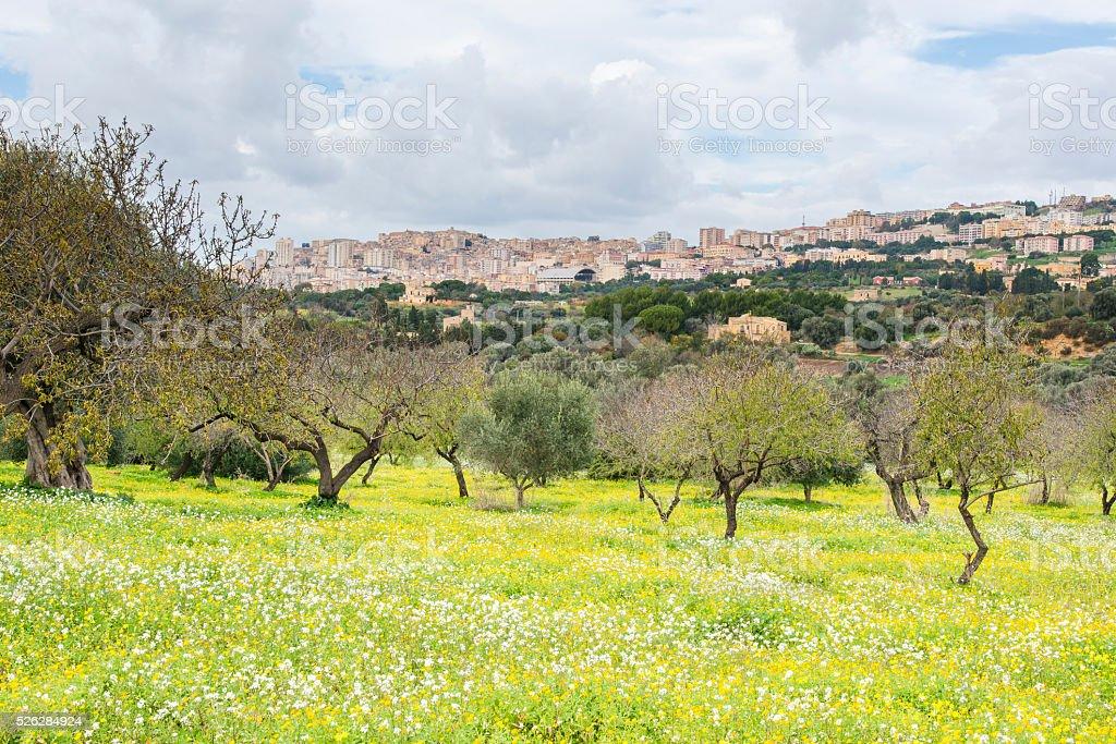 Garden near archaeological area of Agrigento. Sicily. Italy. stock photo