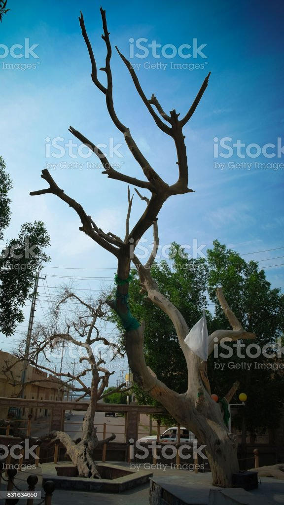 Garden of Eden and ancient Knowledge Tree stock photo