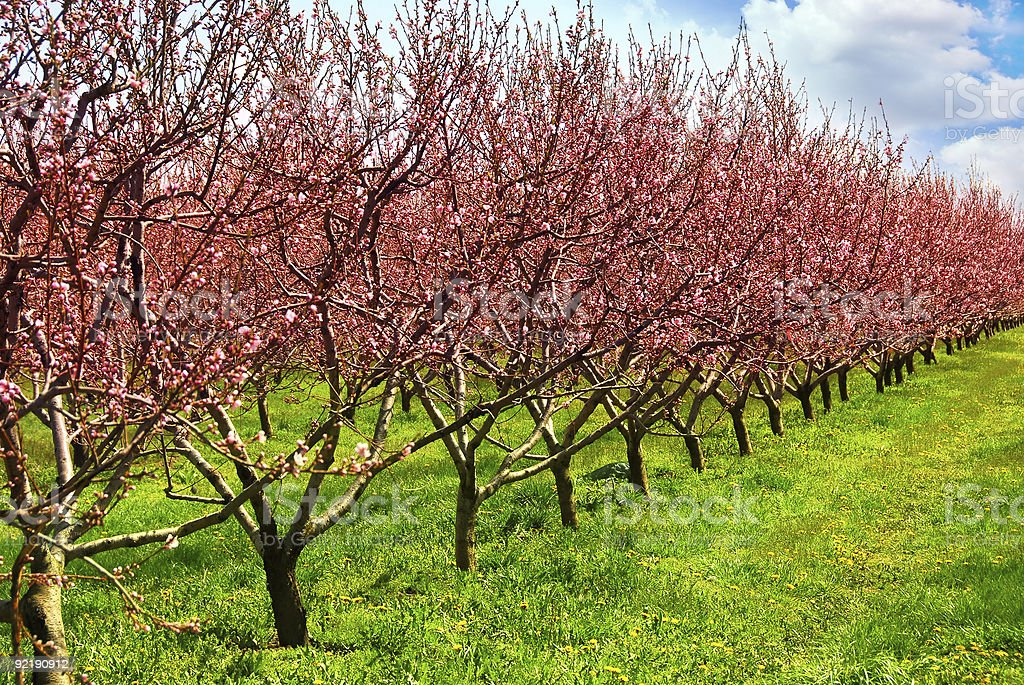 A garden of fruit orchards in the summer time royalty-free stock photo