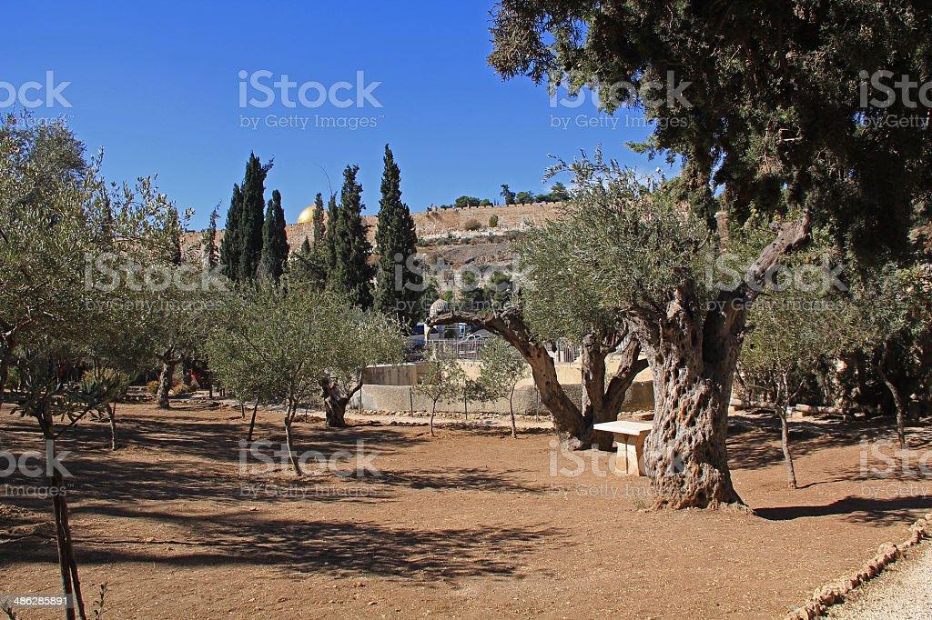 Garden of Gethsemane in Israel stock photo