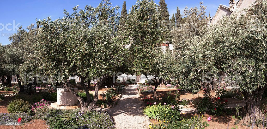 Garden of Gethsemane royalty-free stock photo