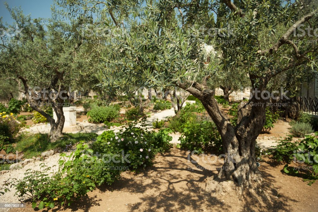 Garden of Gethsemane stock photo