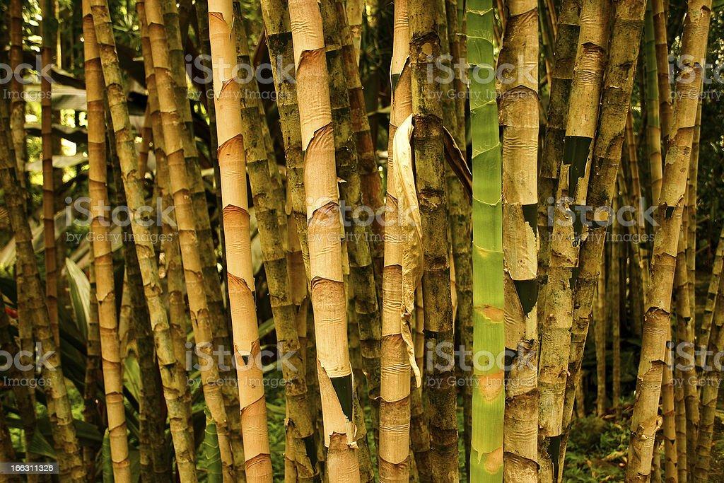 Garden of canes stock photo