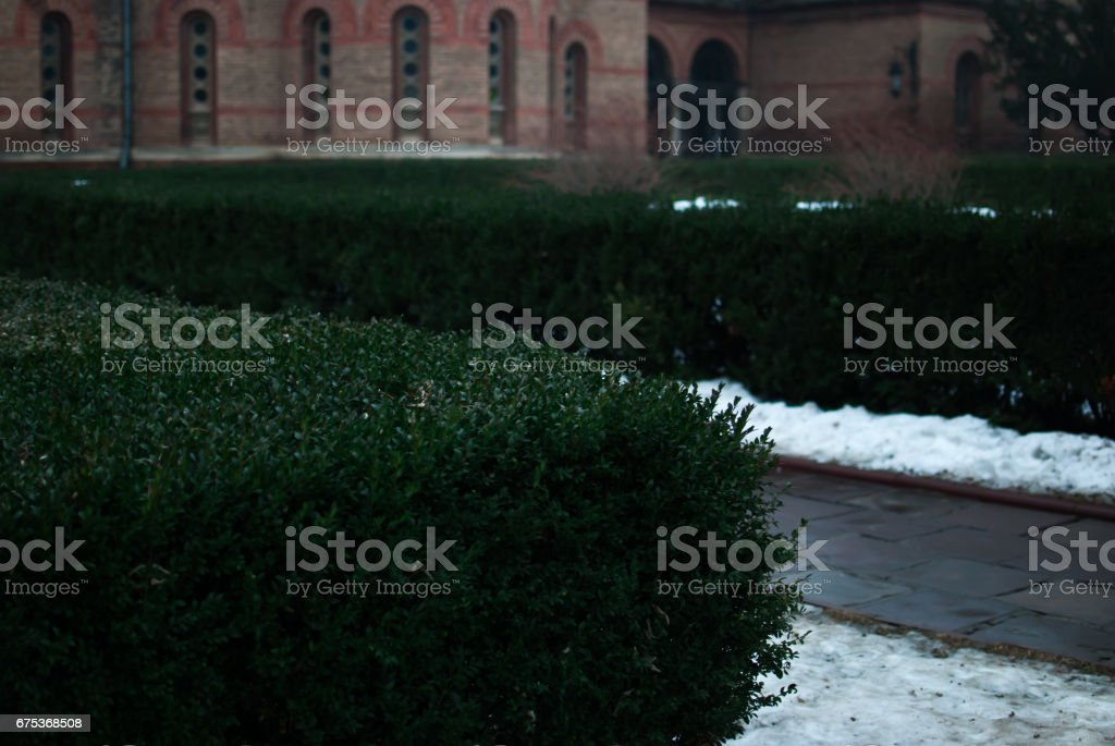 Garden of green bushes in the cloudy winter afternoon stock photo
