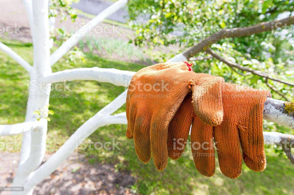garden orange gloves stock photo