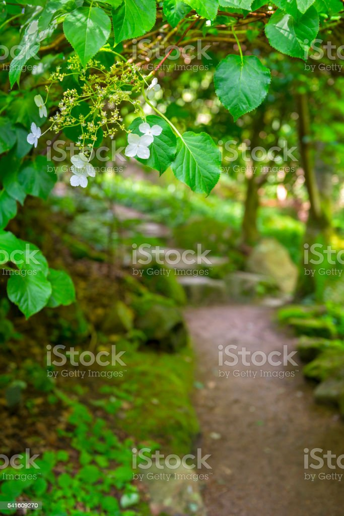 Garden path and arch stock photo