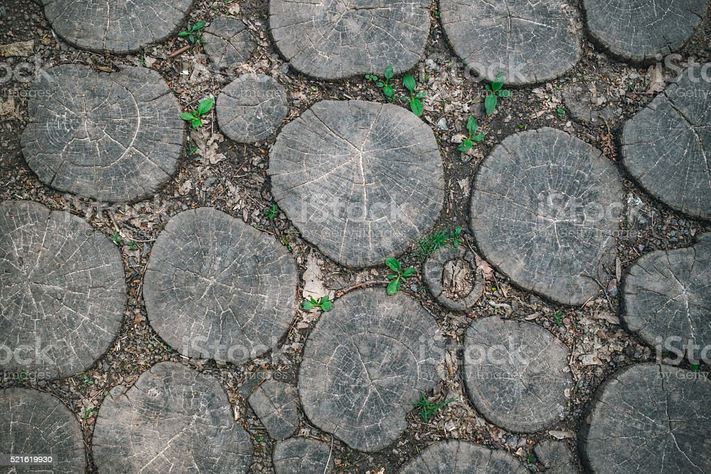 Garden path paved with oak planks stock photo
