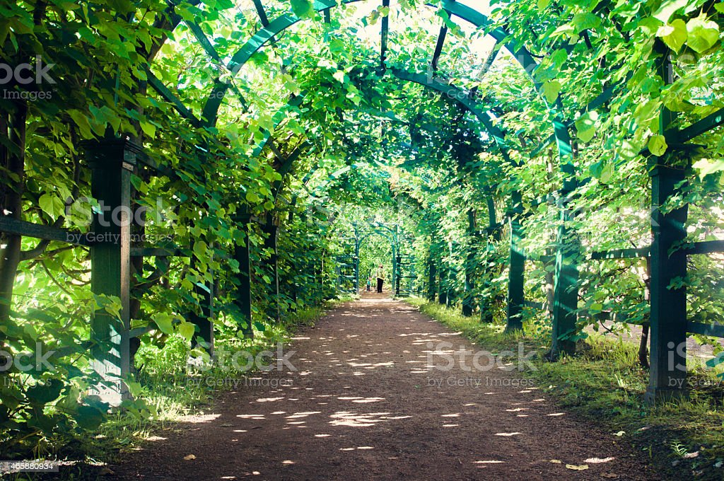Garden path Summer Palace Peterhof St Petersburg Russia stock photo